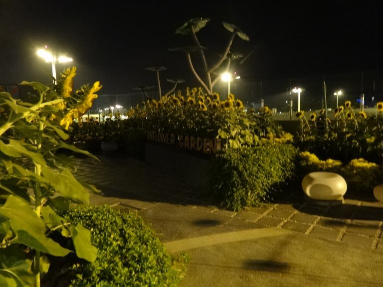 The Sunflower Garden at night