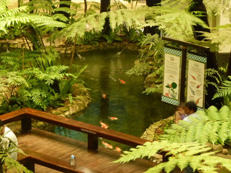 The Koi Carp are fed at intervals during the day
