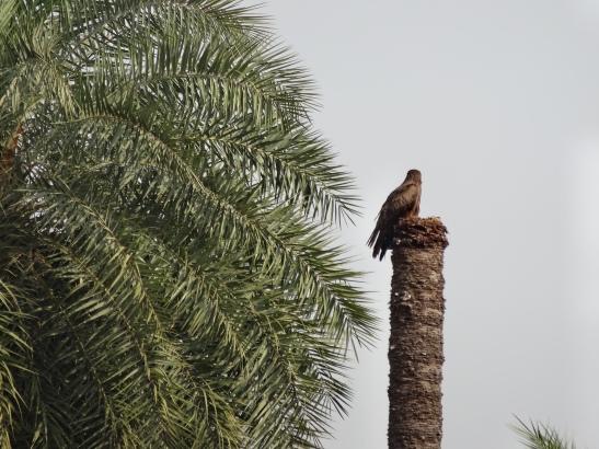 Birdlife abundant