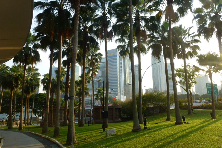 Looking back at the CBD through the trees of Esplanade Park