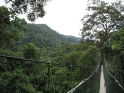 The isolation of Taman Negara