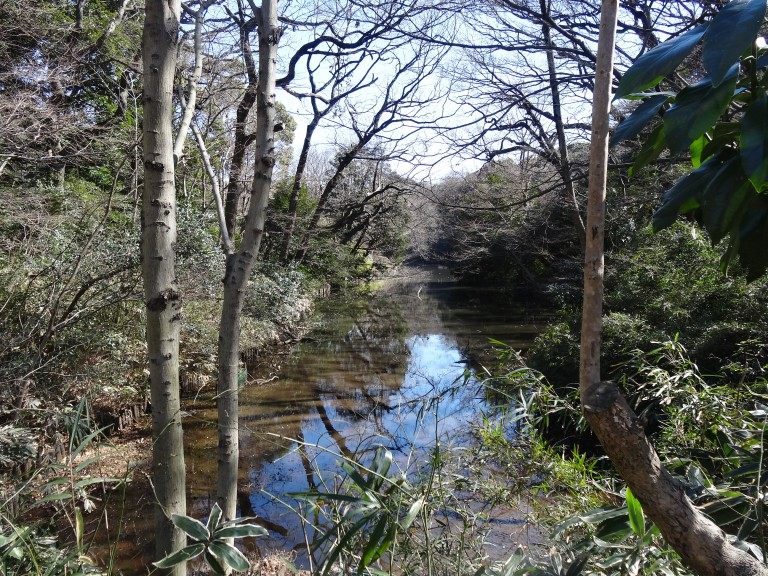 Tranquil stream on a cold winter's day