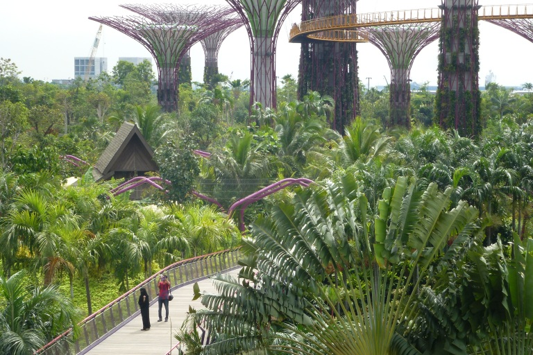 The famous SuperTrees of Gardens by the Bay