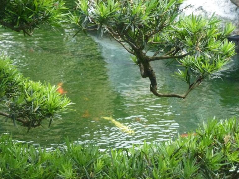 Koi ponds everywhere