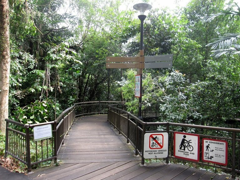 The beginning of the Canopy Walk over Kent Ridge Park