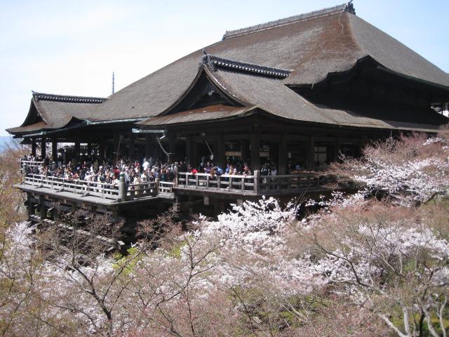 Kiyomizu Cherry Blossom