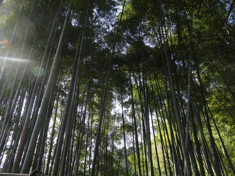 A bamboo forest on the way up...