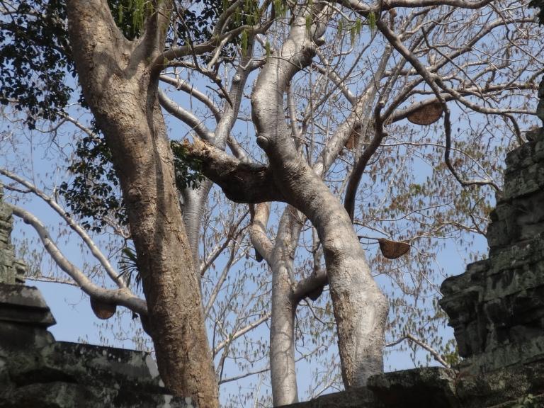Deep in the jungle - careful overhead!