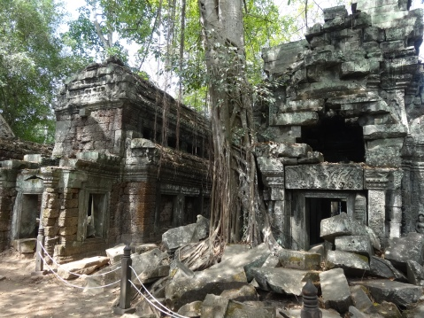 Hanging vines and temple ruins - Lara Croft would love it here!