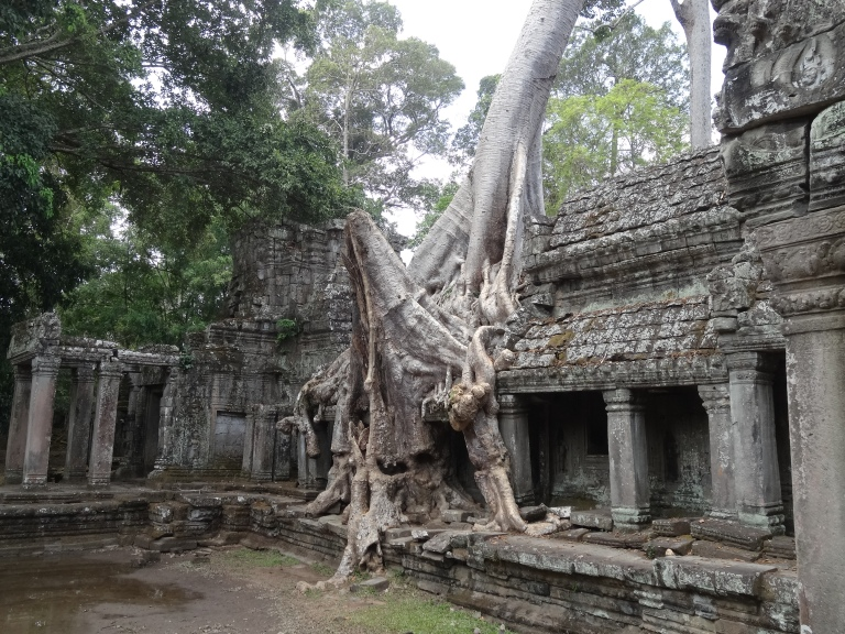 Preah Khan also has one of those famous trees like at Ta Prohm!