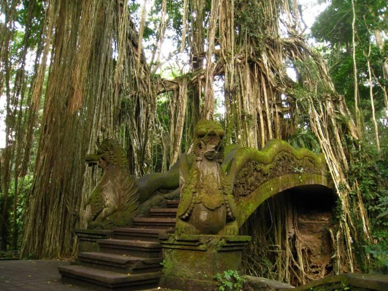 monkforest