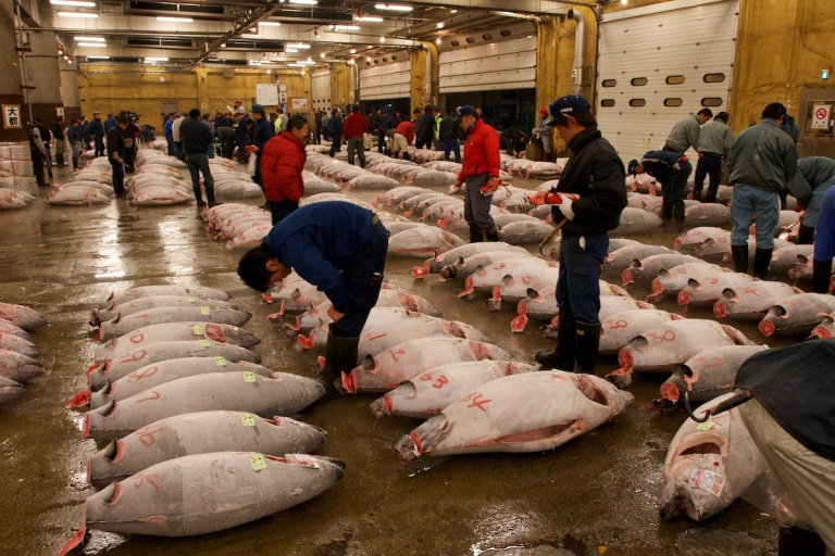 A tuna auction at Tsukiji Fish Market, Tokyo
