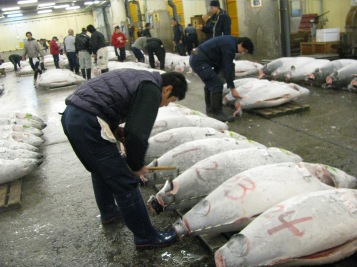 Swimming with the fishes at Tsukiji