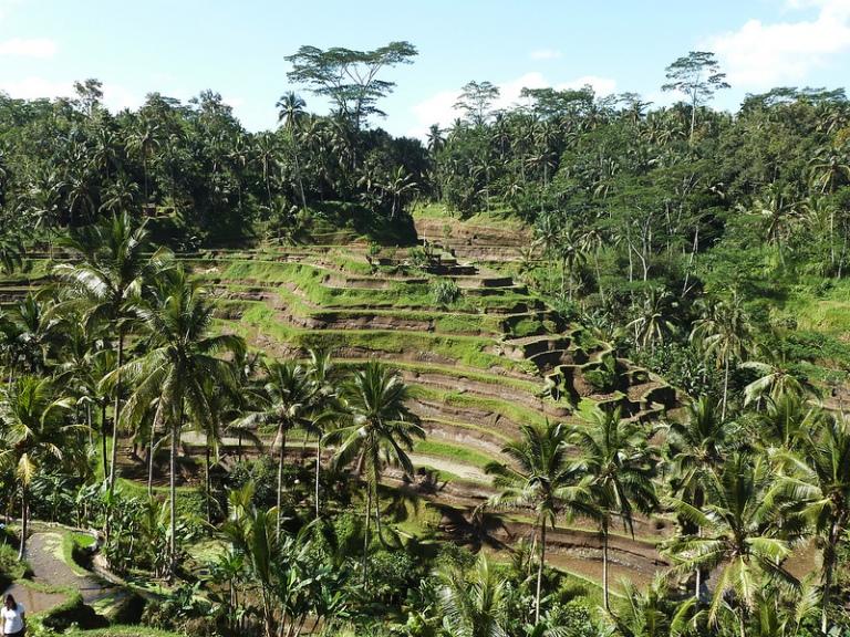 Incredible Ubud scenery enroute