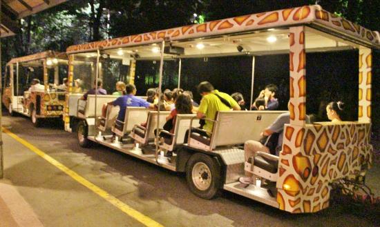 The Night Safari Tram