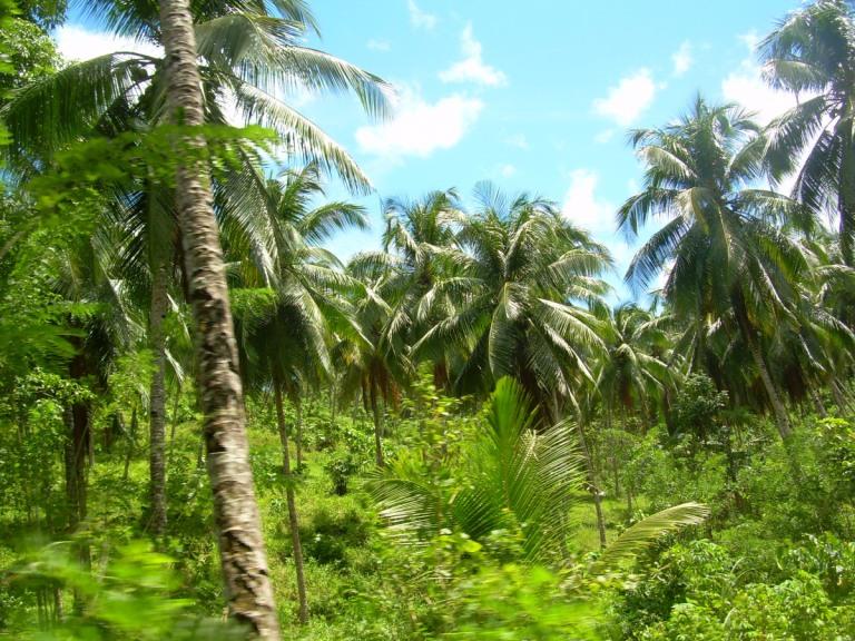 The tropical jungle of Tangkoko