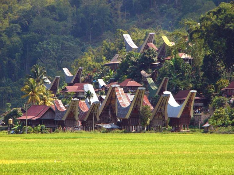 Tongkonan houses in the jungles of Tana Toraja, Sulawesi