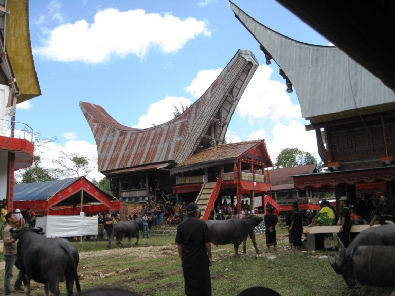 Buffalo slaughter is a ritual that takes place in the tongkonan community