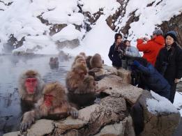 Jigokudani Snow Monkeys