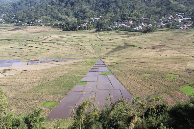 Spider-Web Rice Paddies (Photo Credit: Harinda Bama)