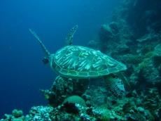 Bunaken Marine Park in Sulawesi