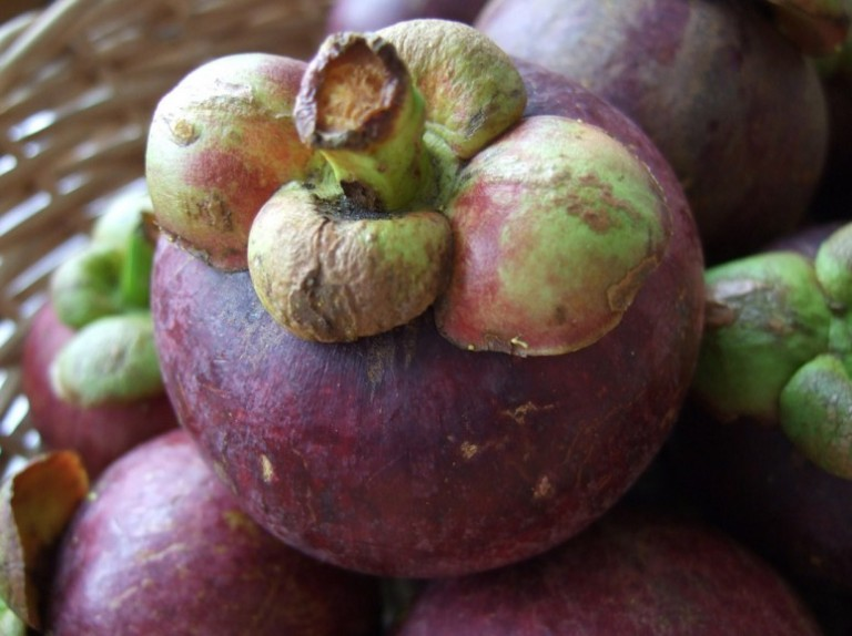 The Great Mangosteen Conspiracy