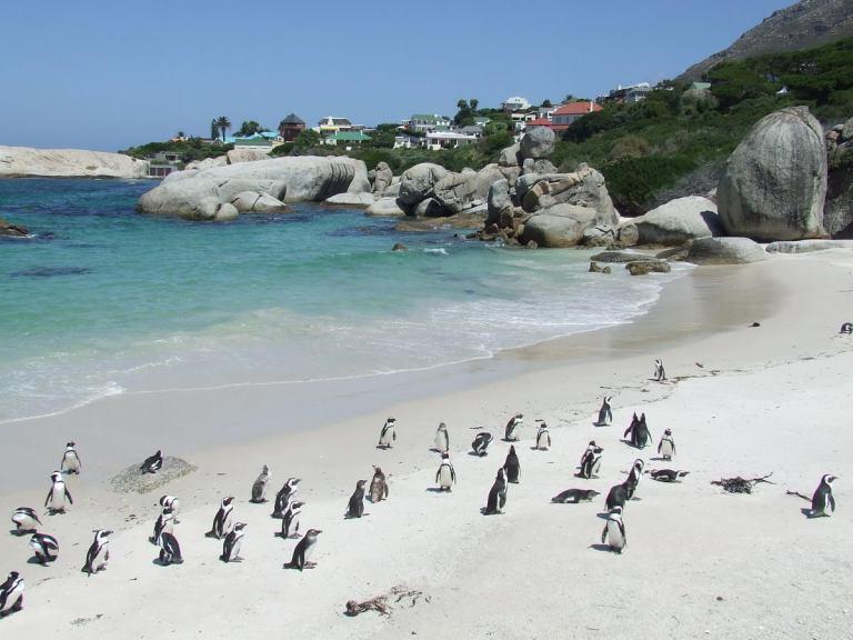 penguins17
