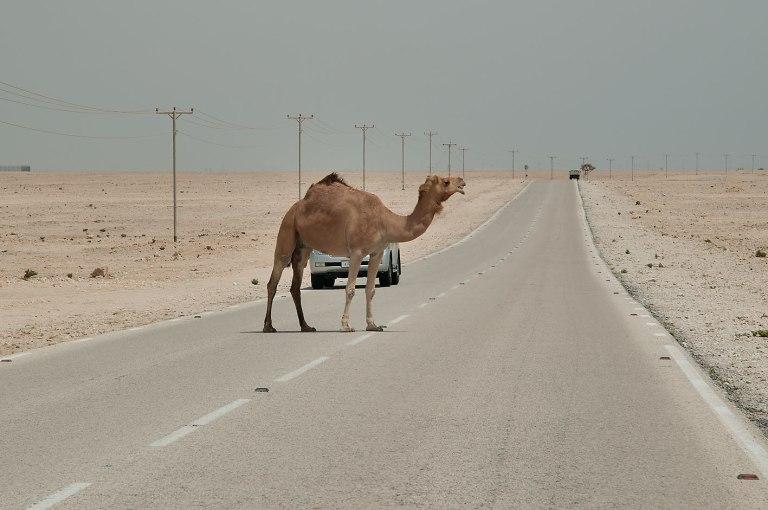 [Immagine: qatar36.jpg?w=768&h=510]