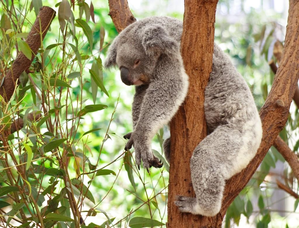 [Image: koala.jpg?w=1024&h=781]