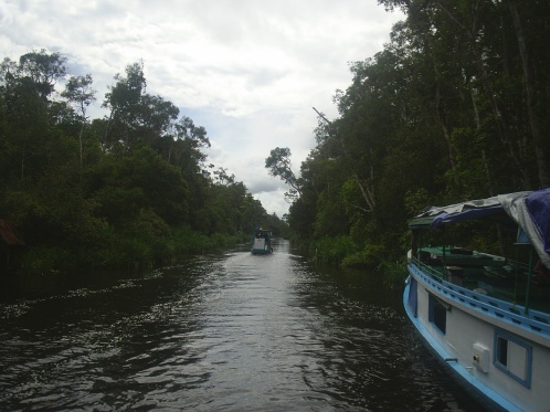 Kalimantan's jungle