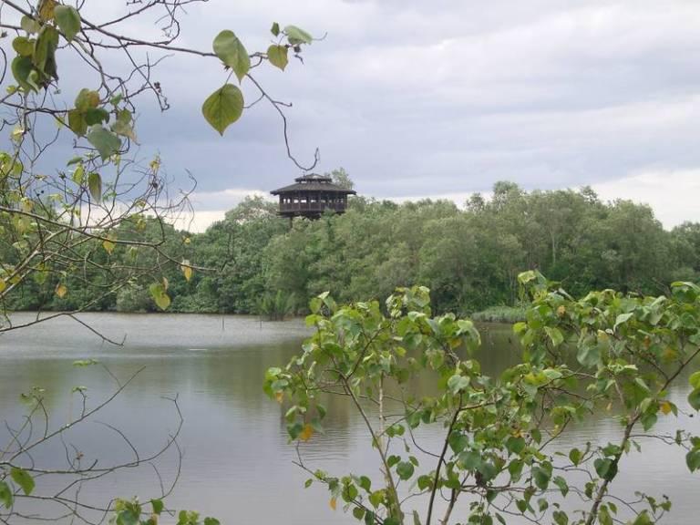 Sungei Buloh's Observation Tower