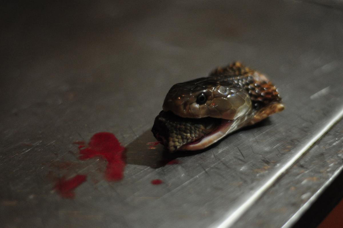 Snake: at the heart of Vietnamese cuisine