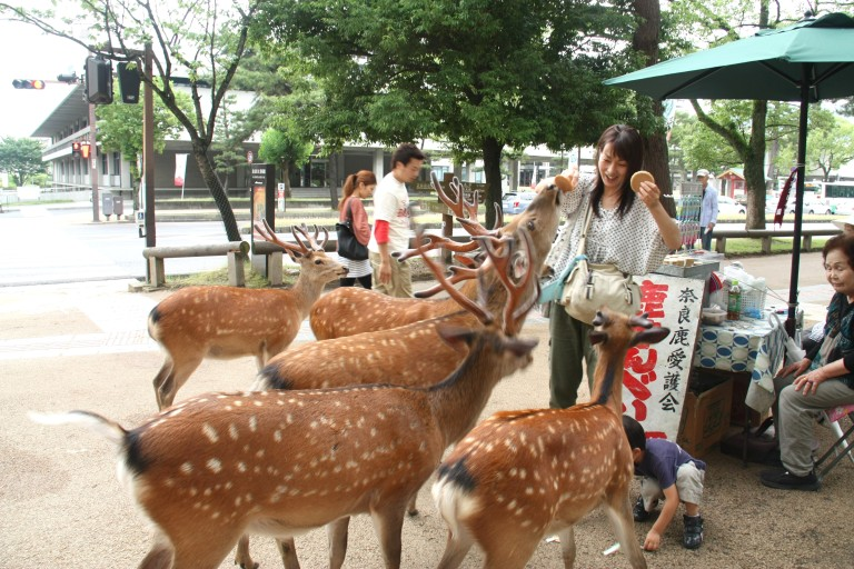 Tourists get mobbed by the aggressive deer
