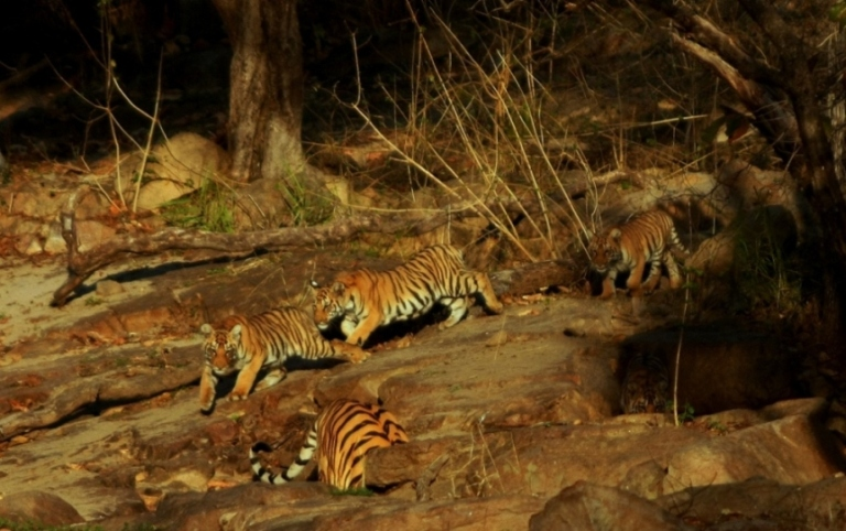 Night safari at Pench