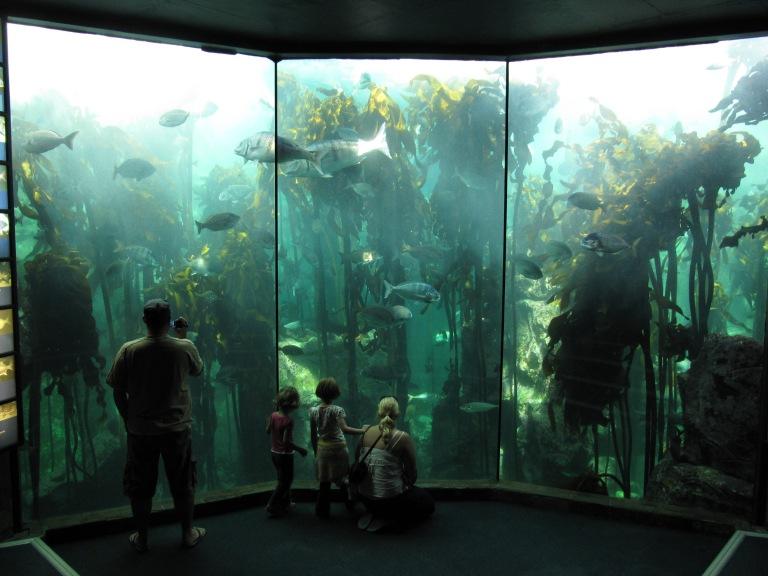 Cape Town's TWO OCEAN'S Aquarium