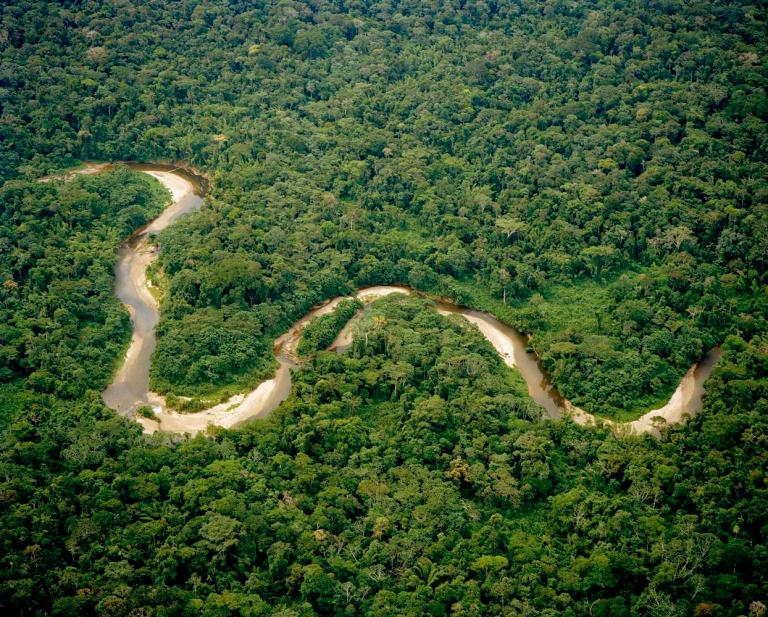 The Amazon River and Rainforest