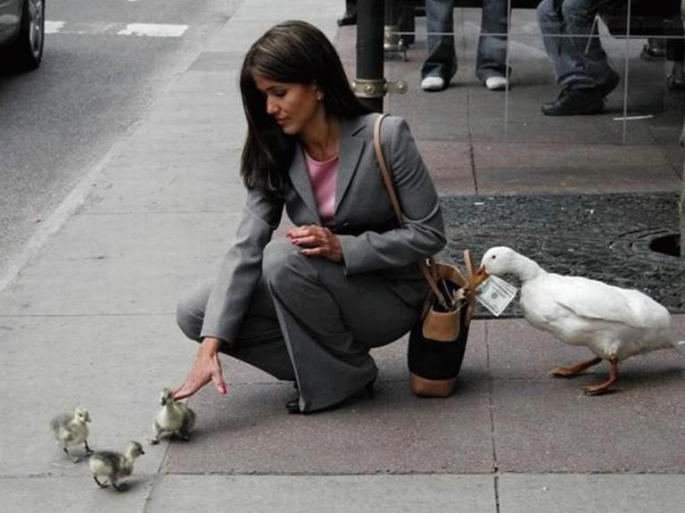 duckpickpocket