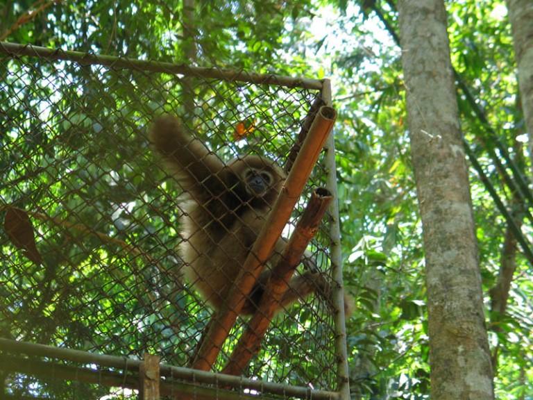 The Gibbon Rehab Centre