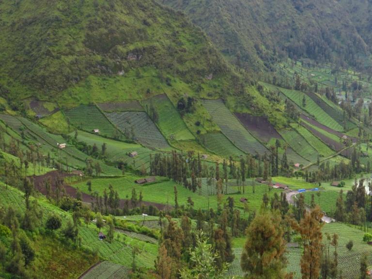 Lush and verdant hillside
