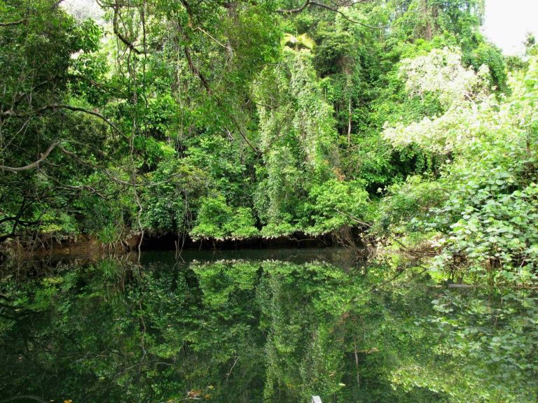 The Daintree Rainforest in Queensland