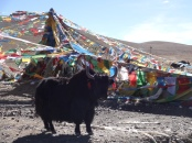 The natural beauty of Tibet is why people come here!