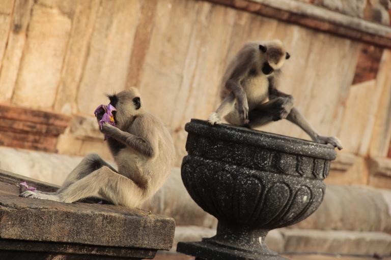 anuradhapuramonkey