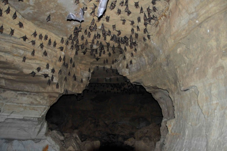 A Bat Cave in Pokhara