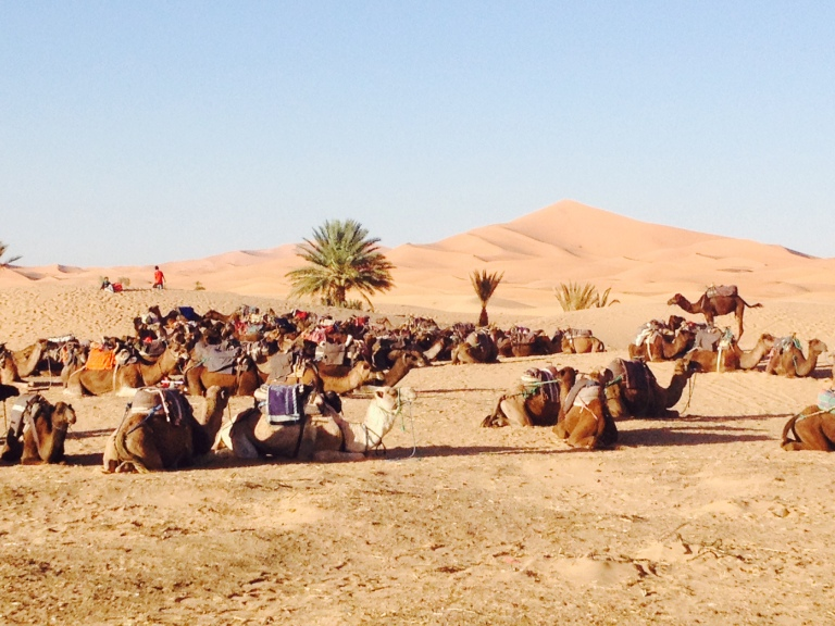 Camel treks are the main reason for a Sahara tour from Marrakech