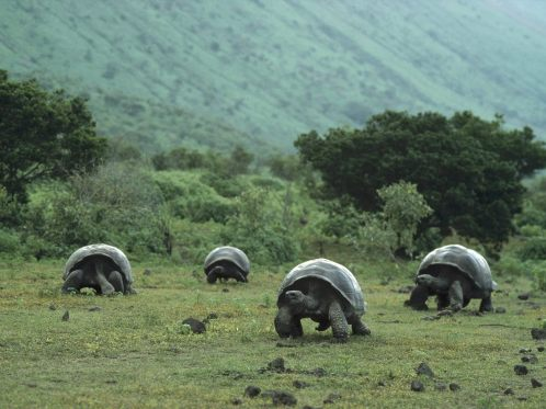The Galapagos Islands is Ecuador's best-known tourist destination