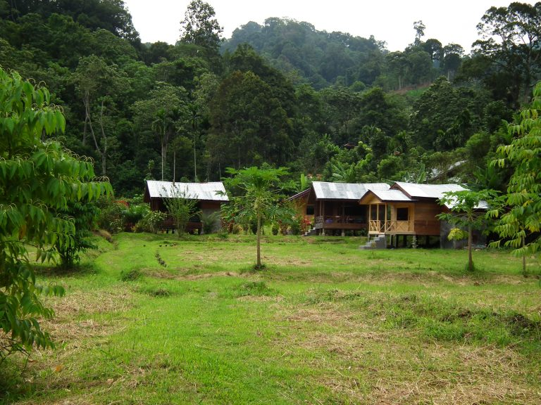 Basic jungle lodges are available with tour groups