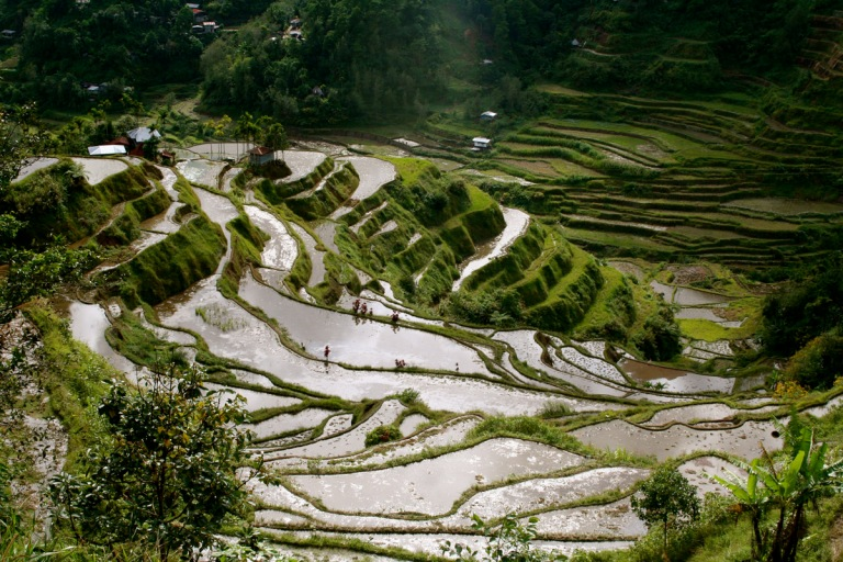 The Banaue Rice Terraces are a UNESCO World Heritage Site