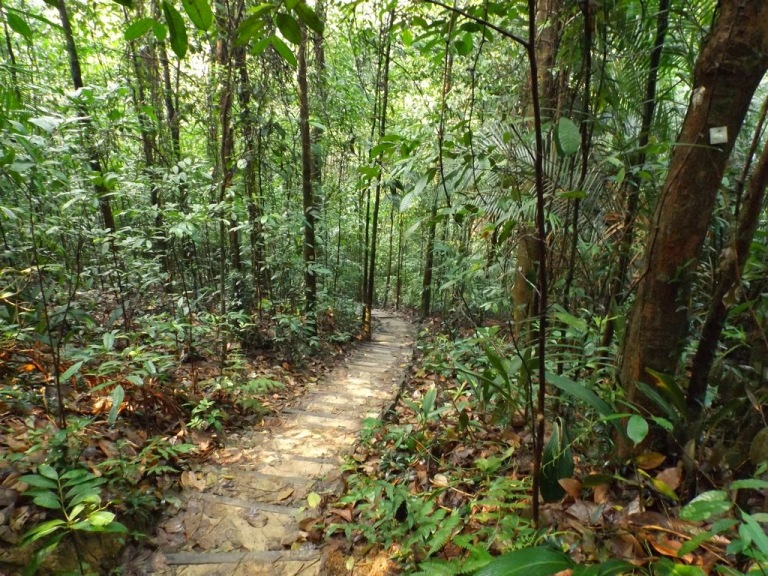 Bukit Gasing Forest Reserve