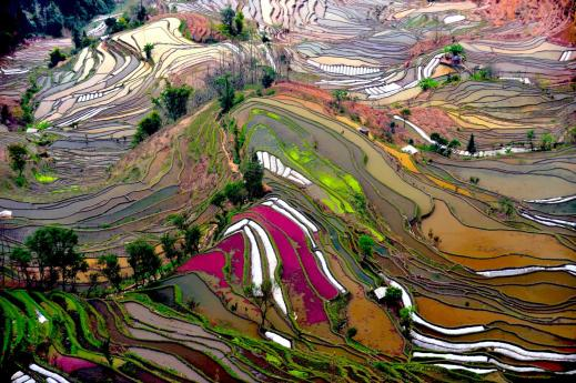 Yuanyuan Rice Paddies