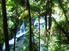 Lamington National Park near Brisbane